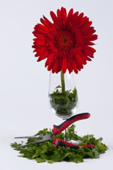 Parsley, a clamp, a chrysanthemum and a glass #1