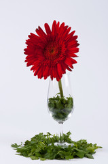 Parsley, a chrysanthemum and a glass