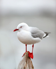 A photo of A beautiful seagull sitting and relaxing