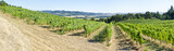 Vineyard in Willamette Valley Oregon