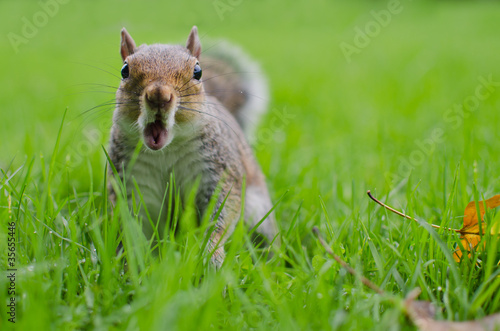 Squirrel astonished