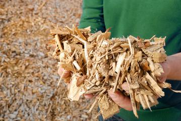 Hand mit Holz Hackschnitzel