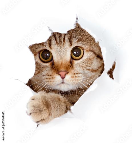 kot patrząc w otwór strony papieru rozdarty otwór na białym tle