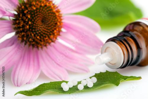 Fototapeten,kugelblüte,homöopathie,homöopathisch,heilendekraft