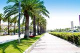 beach boulevard in Salou with palm trees poster