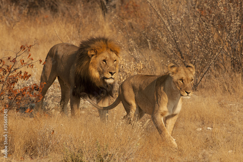 Para lwów