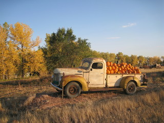 Autumn Harvest by Truck