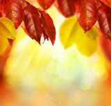 Fall. Autumn Background