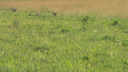 bird flock 06
