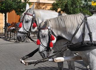 Horse in Cracow - Poland