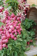 Organic radishes in pink and red at a Farmer's Market