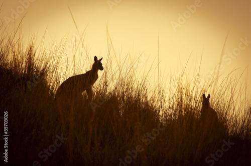 Poster Kangoeroe Kangaroo Silhouettes