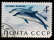 Postal stamp. Common dolphin, 1971