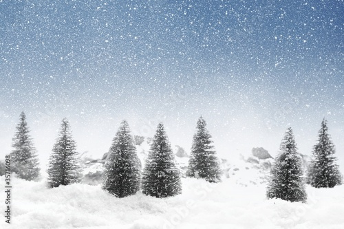 Fir trees with snowfall