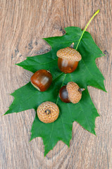 green sheet with acorns on a wooden background