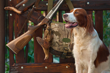 Gun dog near to shot-gun and trophy, outdoors