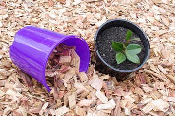 mulch pot and potted plant