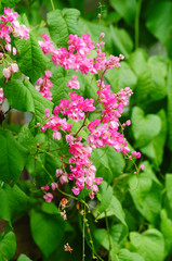 Pink flower and green background