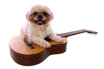 junger Hund Shih Tzu mit Gitarre