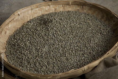 Unripened green coffee beans