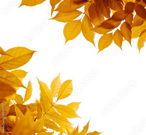 feuilles en automne feuillage jaune marron photo libre. Black Bedroom Furniture Sets. Home Design Ideas