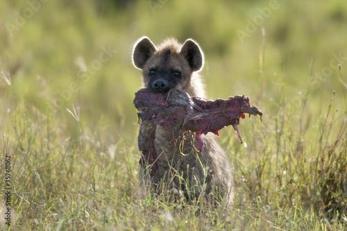 Fotobehang Hyena Hyena in Serengeti National Park, Tanzania, Africa