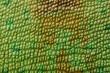 canvas print picture - Lizard skin