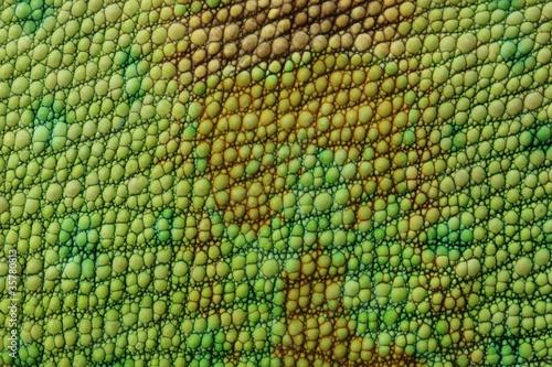 canvas print picture Lizard skin