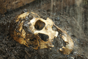 Real human skull in rain figured as crime scene