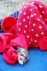 A ferret sleeping in a sack