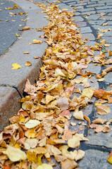 Herbstlaub, Bordstein, Kurve