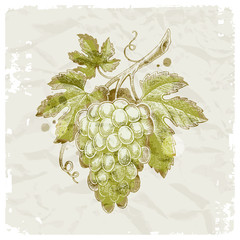 Hand drawn bunch of grapes on vintage paper background
