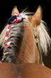 Cheval de trait - Gros plan crinière