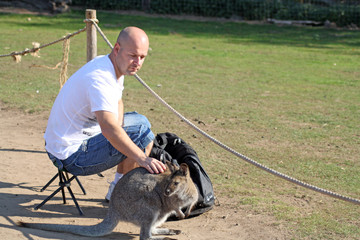man petting a wallaby