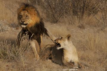 La ribellione della leonessa