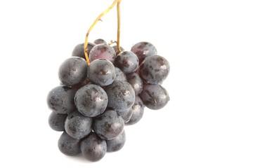 grappolo di uva nera