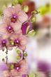 Fototapeten,orchid,blume,spa,schönheit