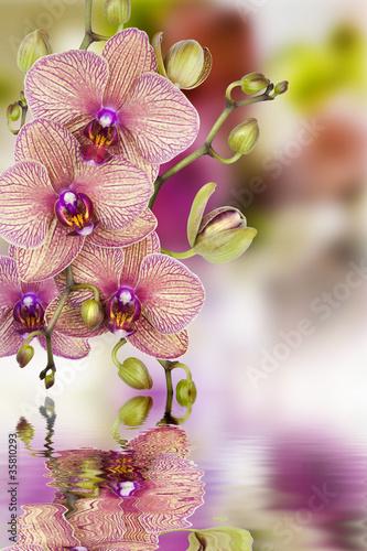 Fototapeten,orchidee,blume,kurort,schönheit