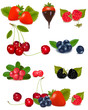 Group of berries and cherries. Vector.