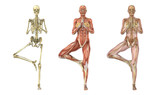 Yoga Tree Pose - Anatomical Overlays poster