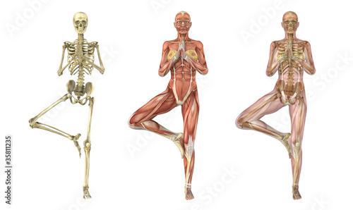 Yoga Tree Pose - Anatomical Overlays