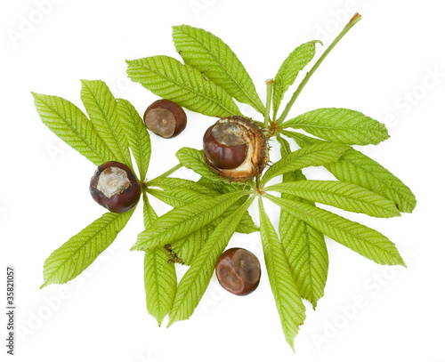 Chestnuts with fresh green leaves isolated on white