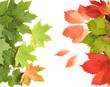 Autumn maple and wild grapes leaves background