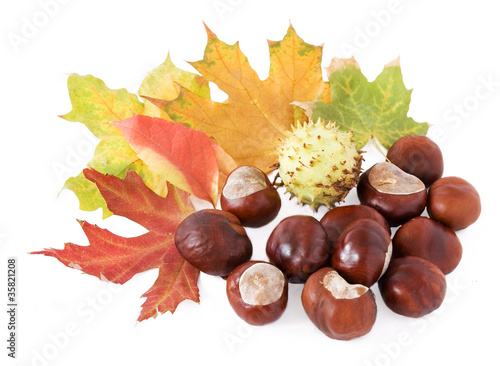 Autumn leaves and chestnuts isolated on white background