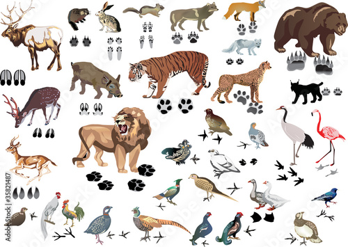 set of animals and its tracks