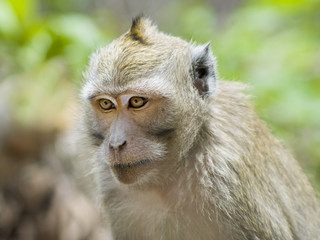 close-up monkey in jungles