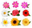 Big collection of beautiful colorful flowers. Vector