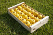 Cageot de pommes golden