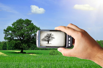 man hand with hand taking photo of tree in meadow
