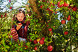 young girl eating an apple in the tree